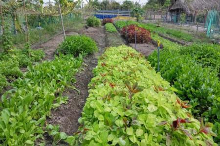 Sang nhượng trang trại trồng rau hữu cơ, nuôi gà thả vườn, heo rừng. Huyện Đức Hòa, Long An