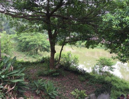 Bán trang trại, khu nghỉ dưỡng Xã Cổ Đông Thị xã Sơn Tây Hà Nội