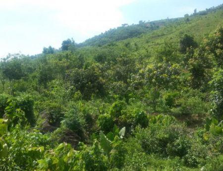 Bán đất trang trại nhà vườn tại Yên Bình, Thạch Thất, Hà Nội